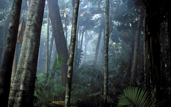Discovering the Rainforest in Kansas City and This Week's Sacramento Startup Happenings